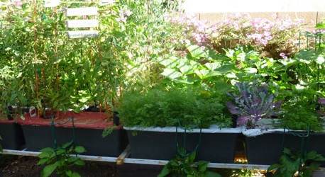 How to Earth Box Gardening