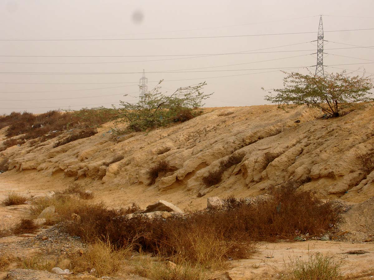 soil erosion Soil is the earth's fragile skin that anchors all life on earth it is comprised of  countless species that create a dynamic and complex ecosystem and is among  the.